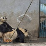 امی ویتال مجله عکس نوریاتو