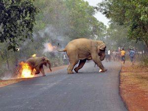 فیل آتش گرفته مجله عکس نوریاتو
