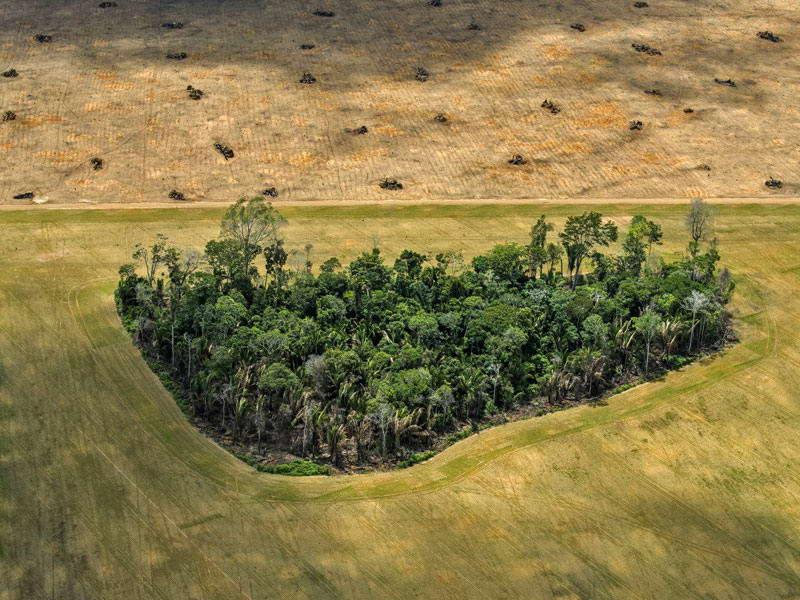 آمازون؛ بهشت در خطر