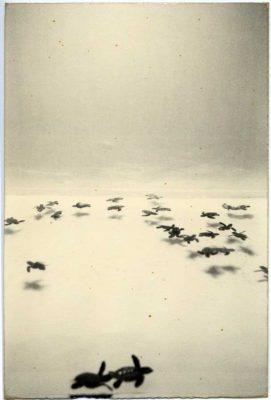 ماسائو عکاس ژاپنی مجله نوریاتو