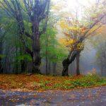 جشنواره فیلم و عکس جنگلهای هیرکانی مجله نوریاتو