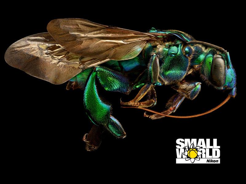2018 Nikon's Small World مجله نوریاتو