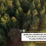 مسابقه عکس جنگل های هیرکانی مجله نوریاتو