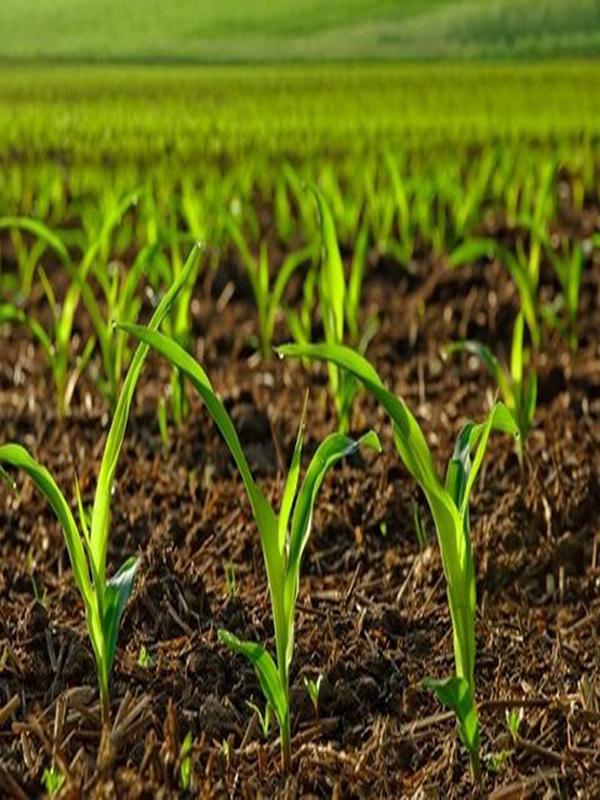 فراخوانجشنواره ملی عکس کشاورزی