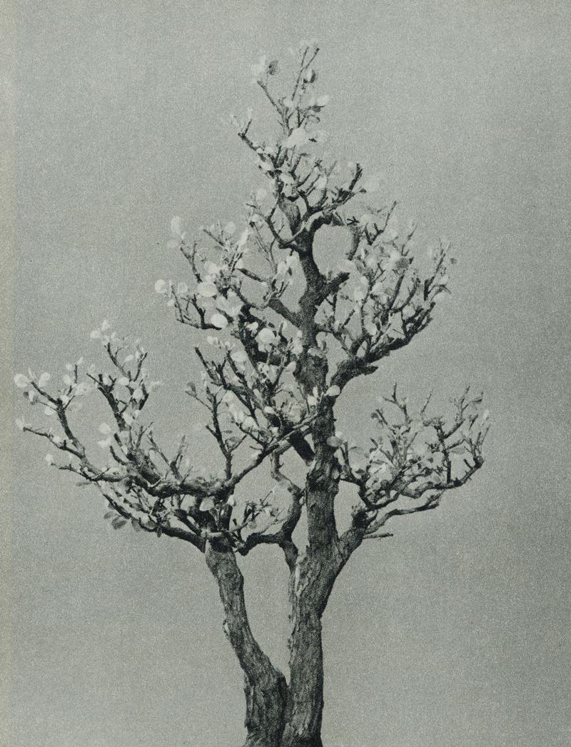 زیر درخت یوزو