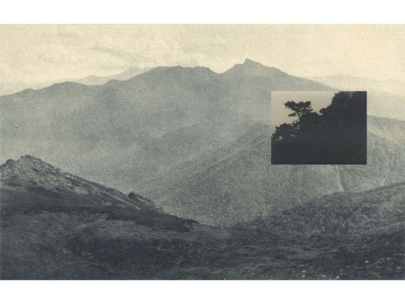 مجموعه عکس: زیر درخت یوزو