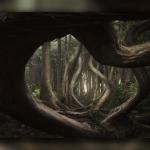 تصاویر برنده جایزه مسابقه عکس منظره
