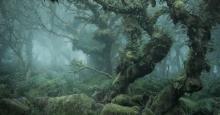 جادوی جنگل در تصاویر نیل بورنل