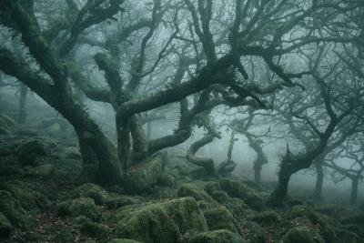 جنگل ترسناک