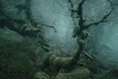 نیل بورنل جنگل