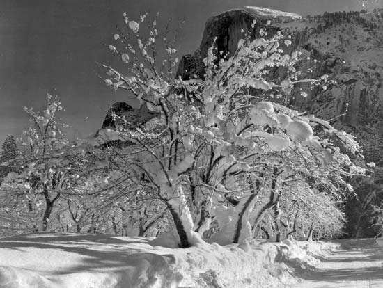 عکس های آنسل آدامز