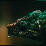 پرتره ماداگاسکار