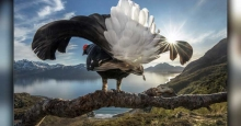 نفرات برتر مسابقه عکاسی دنیای طبیعی بیگ پیکچر معرفی شدند