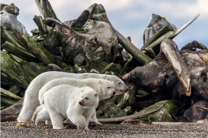 مسابقه عکاسی از طبیعت